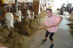 Auch die Kühe brauchen frisches Futter!