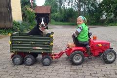 Traktorfahrt mit Hund