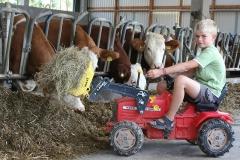 Futter für die Kühe