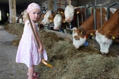 Kühe Füttern macht Spaß!