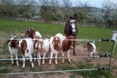 Versammlung der Tiere