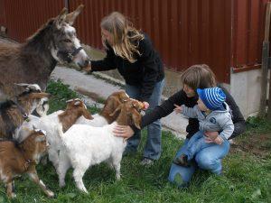 Viele Tiere zum Liebhaben